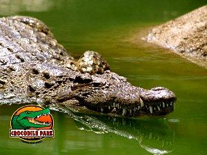 Crocodile Park
